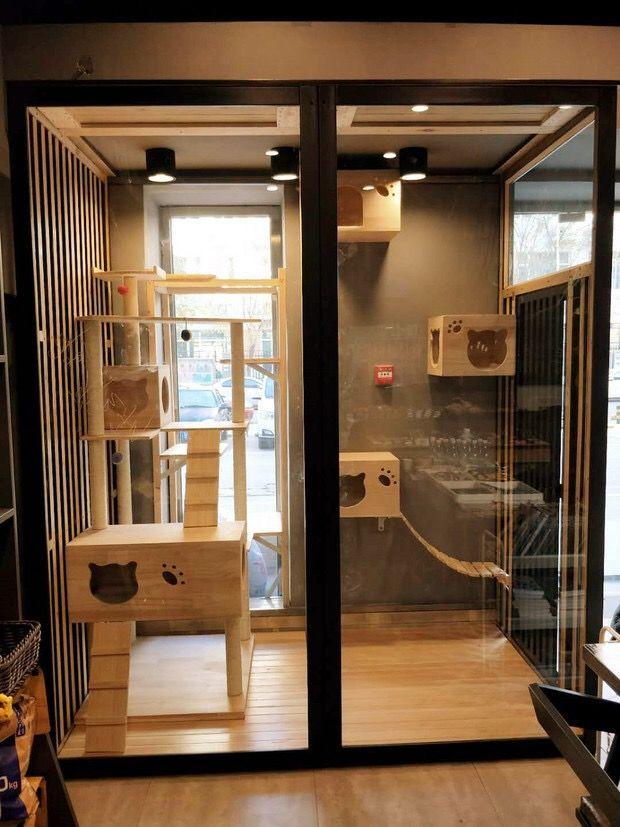 Pin By Agira On Bisnis Cat Condo Cat Houses Indoor Cat Patio Cat Hotel