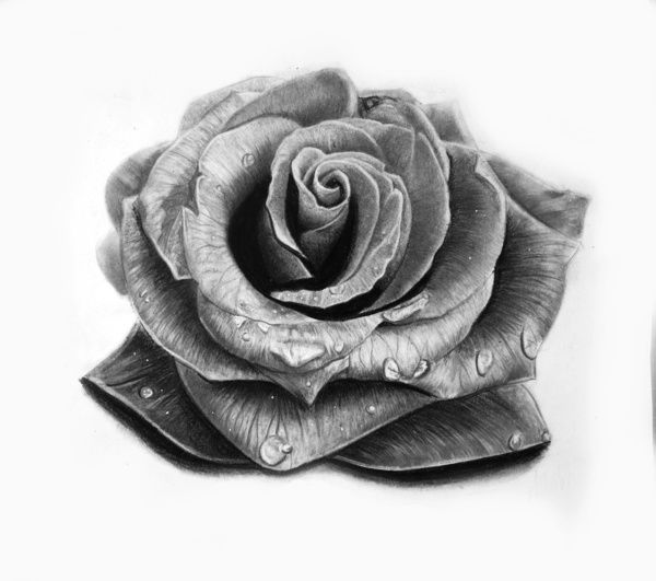 Cabbage Rose Flower Print Purple Abstract Art Kitchen Wall: 21 Best Images About Magnolia Art On Pinterest