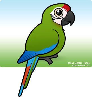 Great Green Macaw Ara Ambiguus