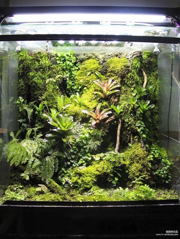 126 Best Images About Aquariums Terrariums Vivariums And