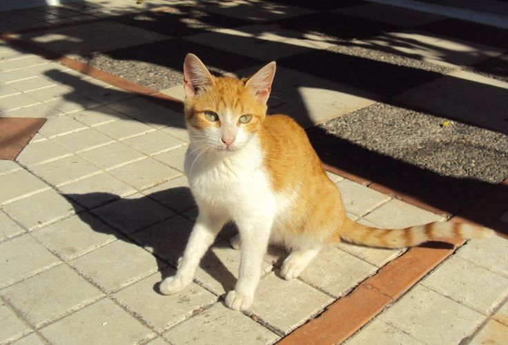 Τετ α τετ με τη γάτα :)
