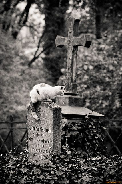 A graveyard cat at the historic Weimar Cemetery in Thuringen, Germany