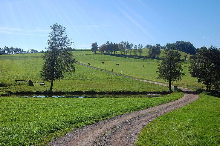 Bølgende åser som er perfekte for vandring i skog og mark kjennetegner området ved Neumarkt im Mühlkreis, Oberösterreich. Foto: Arnold Weisz ©
