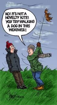 Windy dog walking.