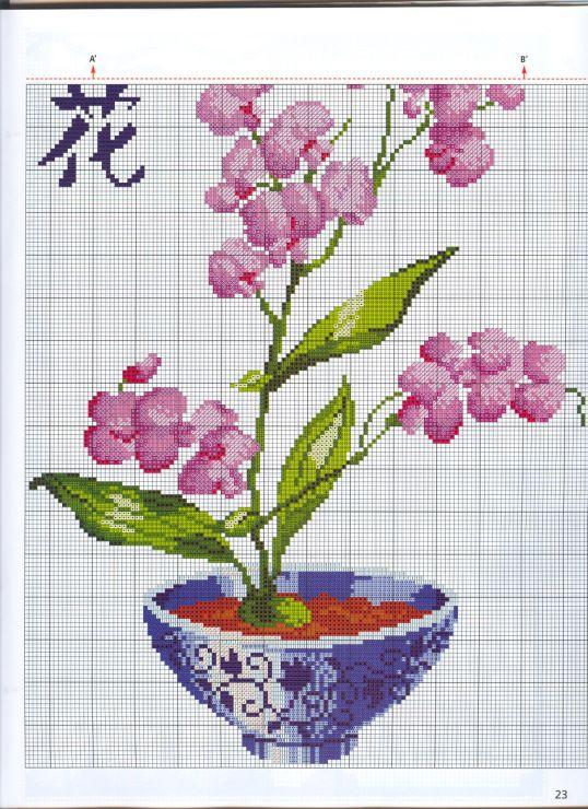 orchid PART 2