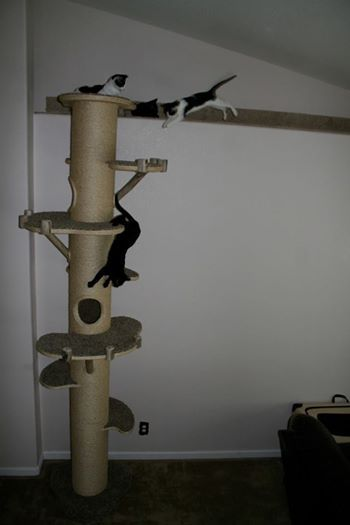 Elitefield Cat Tree Scratcher Furniture Condo House