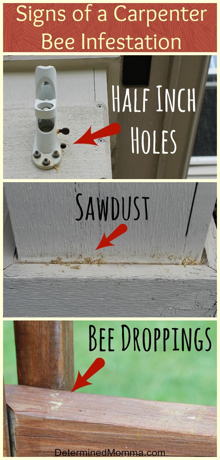 best 25 getting rid of bees ideas on pinterest get rid of wasps