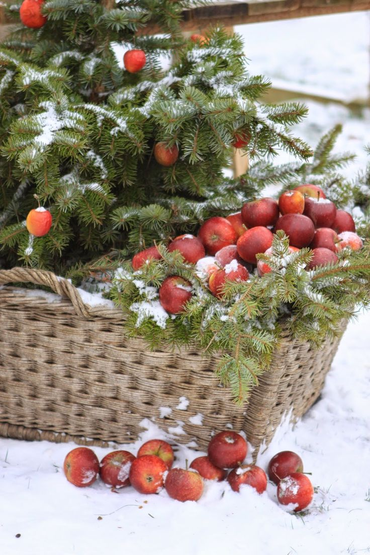Beautiful basket of apples in the snow.