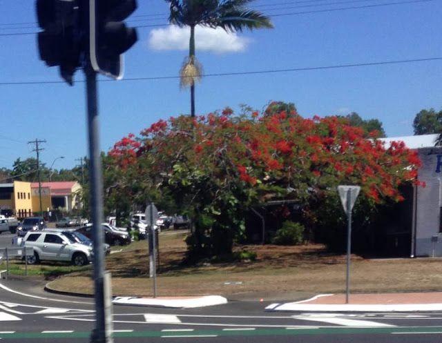 tatyanabinovskatours: Cairns, Australia!!!