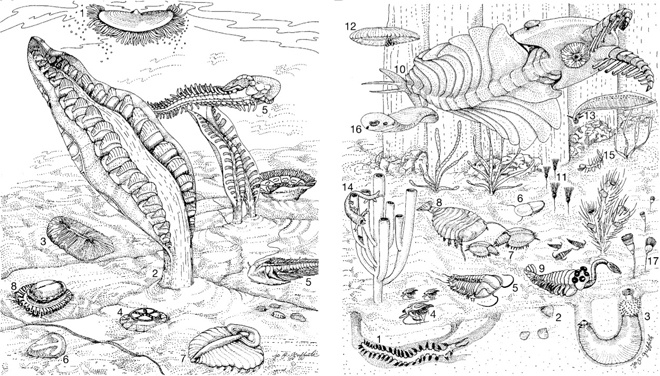 Early Life's Explosion: The sheer enormity of new body plans and life forms that emerged 540 million years ago, during what's known as the Cambrian explosion, is evident in this simple but rich illustration. Contained in a paper on the origin of central nervous systems, it depicts the organisms that existed prior to the Cambrian explosion (left) and those that followed (right). #Cambrian