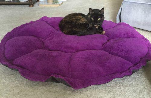 25 best ideas about jackson galaxy on pinterest cat for Jackson galaxy mojo maker