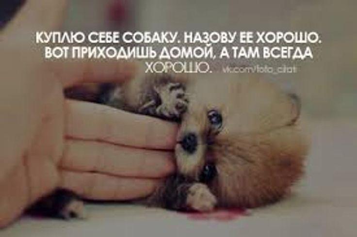 смешные цитаты с картинками со смыслом: 17 тыс изображений найдено в Яндекс.Картинках