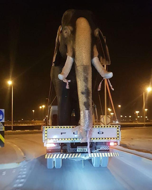 وصل الفيل حق ذباح العيد نموذج فيل حقيقي يتم نقلة الى المدرسة الهندية