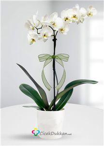 orkidesiz olmaz... online çiçek göndermek için en güvenilir adresiniz.. www.cicekdukkan.net