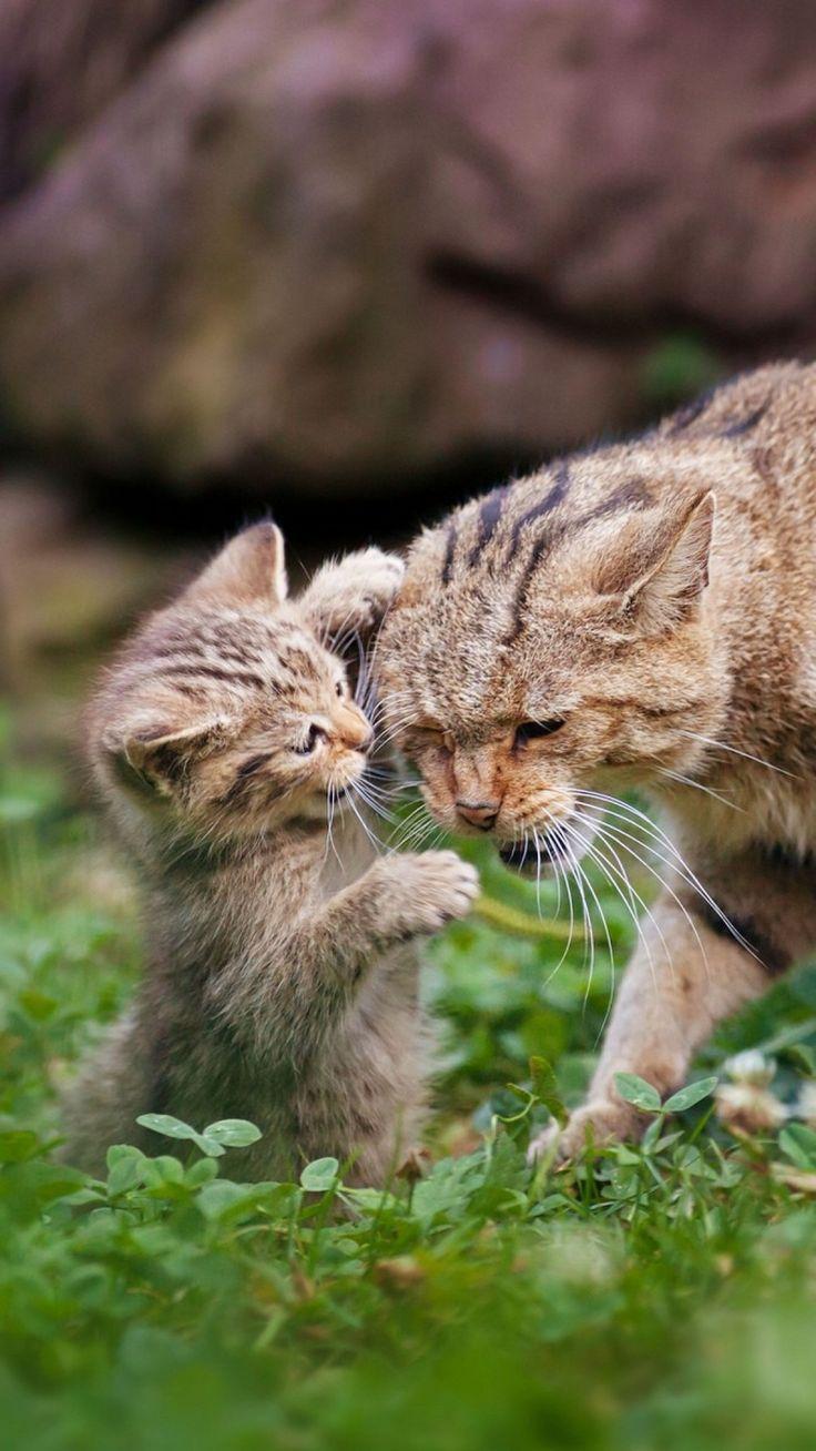 cat, grass, kitten, caring, playful, walk