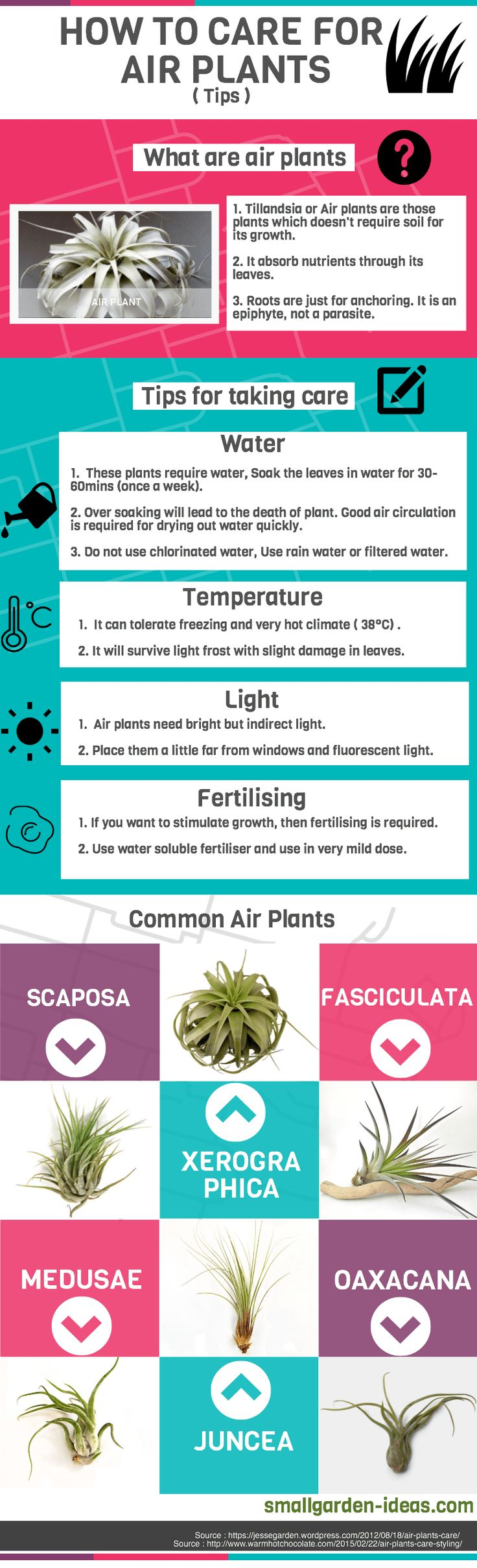 how-to-care-for-air-plants1.png 800×2,629 pixels