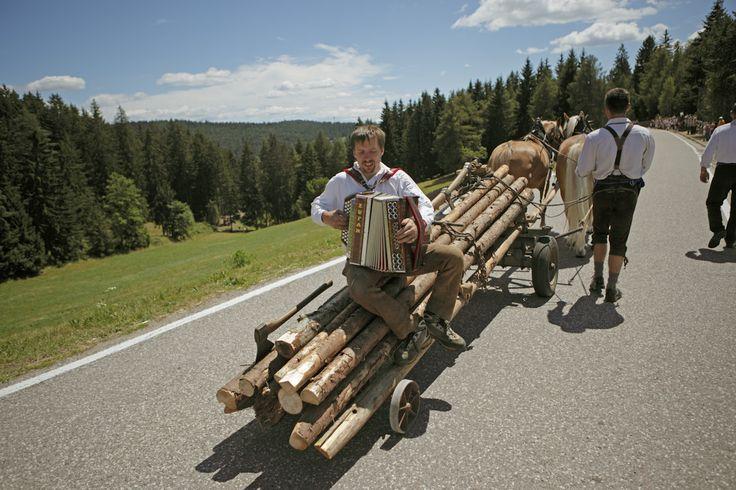 Haflinger horses & traditional festivals