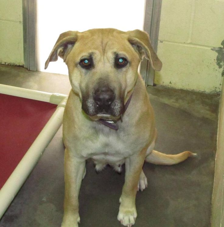 HELP! - Lee County NC Animal Services Adoption - available female mix, came in as a stray...look at that worried face!!!