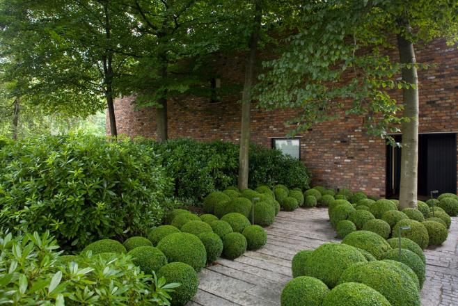 Formal but informal planting multi shaped box (?) balls under trees to give texture and billowing shapes all year round