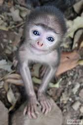 Výsledek obrázku pro roztomilá zvířátka-obrázky