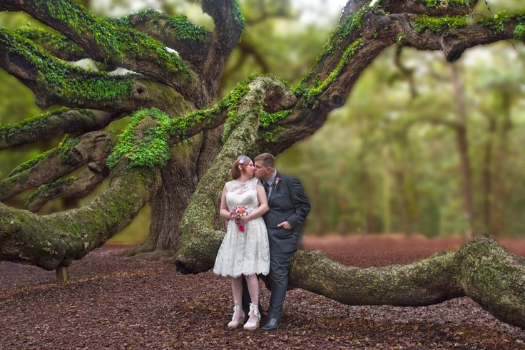 Angel Oak Tree in Charleston SC | Wedding Ceremony ...