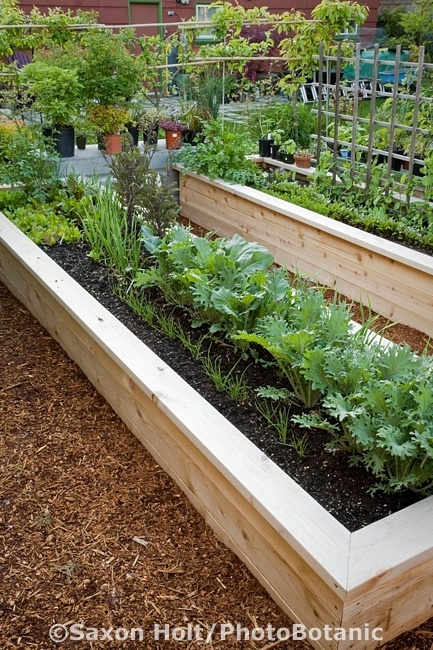 21 best images about garden boarders on pinterest raised beds garden borders and flower bed for Best wood for raised garden beds