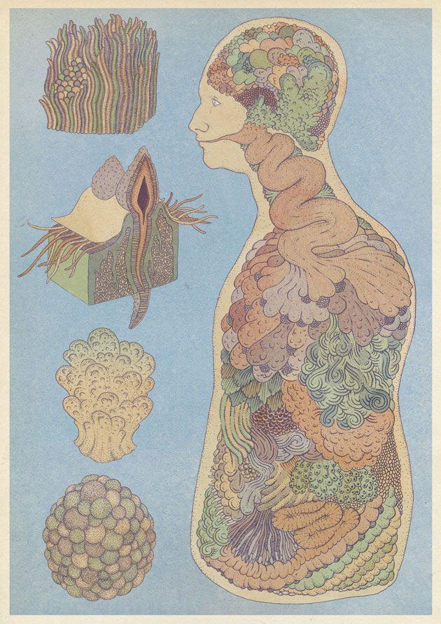 Organs fantasy botanical illustration by Katie Scott