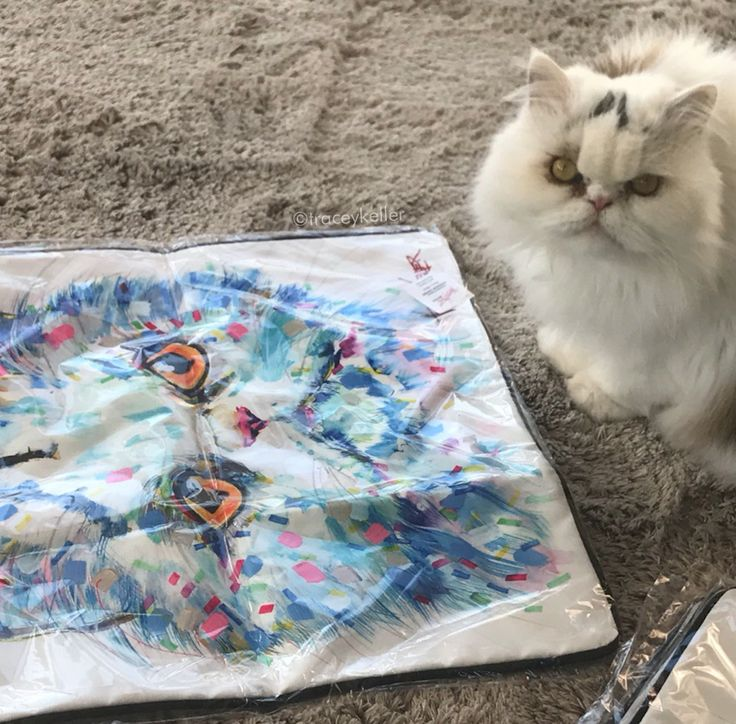 That moment when Milo, the Persian see his face on a TK cushion cover. What do you think? Is he happy?