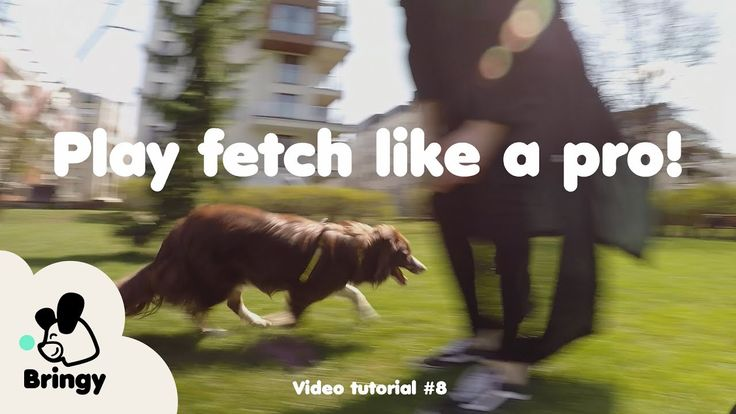 Dogs need a warm-up too! – lifehack #8 by Bringy