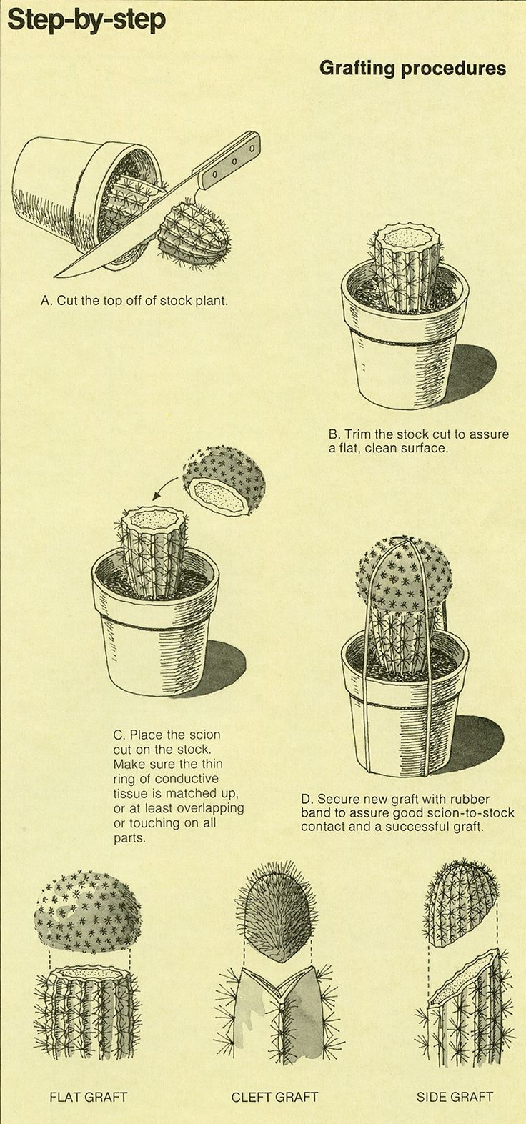 1ff3b2725dab16994876e1b1aceffff9 Jpg 736 1 573 Pixels Plants Planting Succulents Cactus