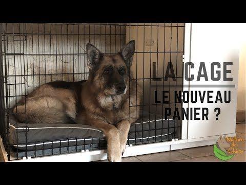 La place du chien à la maison : cage ou panier ? - YouTube