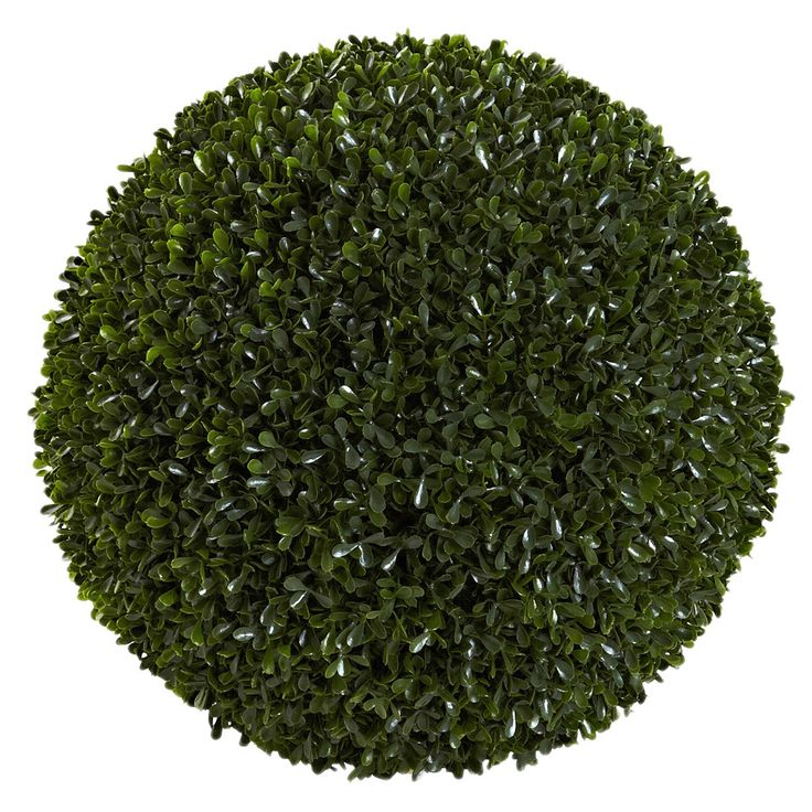 home depot hydrangea tree with Boxwood Shrub on 326289 What Do You Have Growing Your 6 further 204688030 furthermore Plants With Blue Flowers 90650000000CgCb as well Ornamental Magnolia Tree additionally Snow Fountains Weeping Cherry Tree.