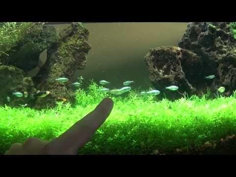 ▶ Best DIY Planted Aquarium LED lighting - YouTube