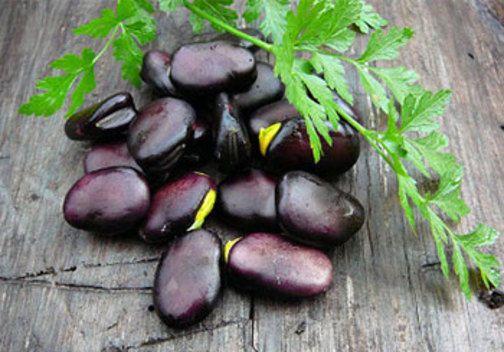 Seeds of Beans RUSSIAN BLACK 10 g Ukraine БОБЫ  РУССКИЕ ЧЕРНЫЕ  S0264