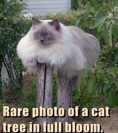 Fat cat tree