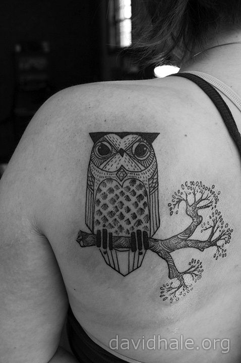 David Hale. This owl is so cute and stern!