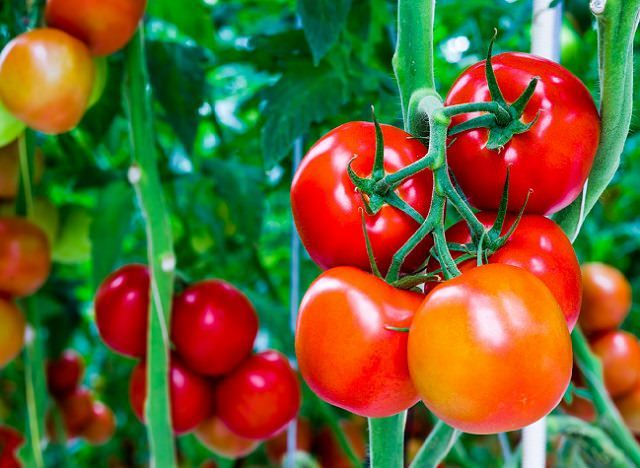 if you want sweeter tomatoes. Simply sprinkle a small amount of baking soda around the base of your tomato plants. The baking soda will be absorbed into the soil and lower the acidity levels, thus, giving you tomatoes that are more sweet than tart.