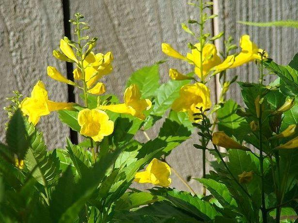 82 Best 2014 Plants Images On Pinterest Garden