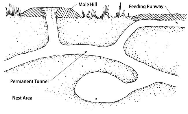 17 best ideas about rabbit burrow on pinterest