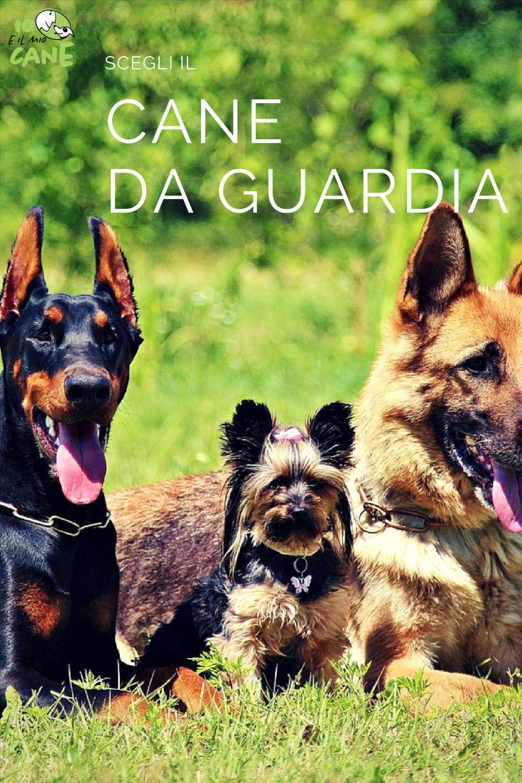 Vorresti un cane da guardia? Leggi i nostri suggerimenti
