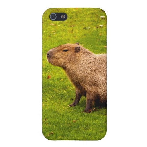 Capybara iPhone 5 Case. I.can.not.believe.this. Exists!
