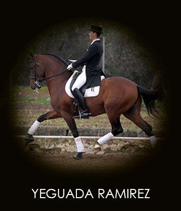 Yeguada Ramirez - Casa del Caballo Andaluz