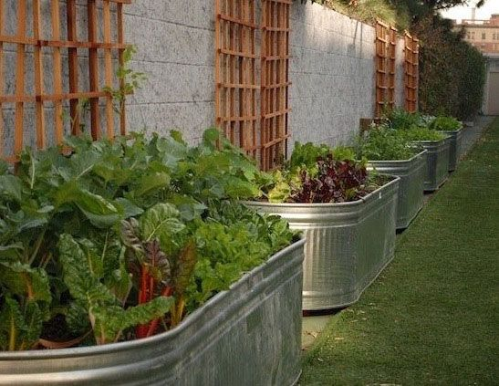 Raised garden beds have many advantages, ranging from saving wear and tear on your back to giving your plants better air circulation and more sunlight. However, you don't have to nail lengths of lumber together to make a raised garden bed. Some of the most attractive, easy-to-use raised beds are made from containers—and among the most versatile containers are galvanized steel troughs designed to hold water for farm animals.