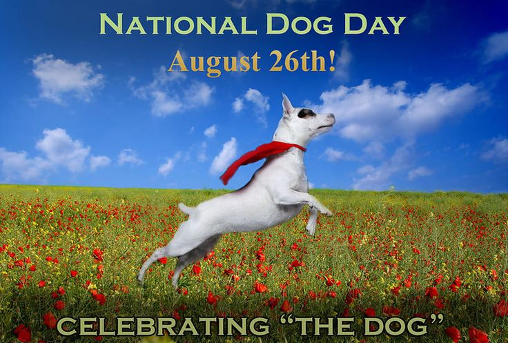 #NationalDogDay How do you plan to celebrate? #dogs