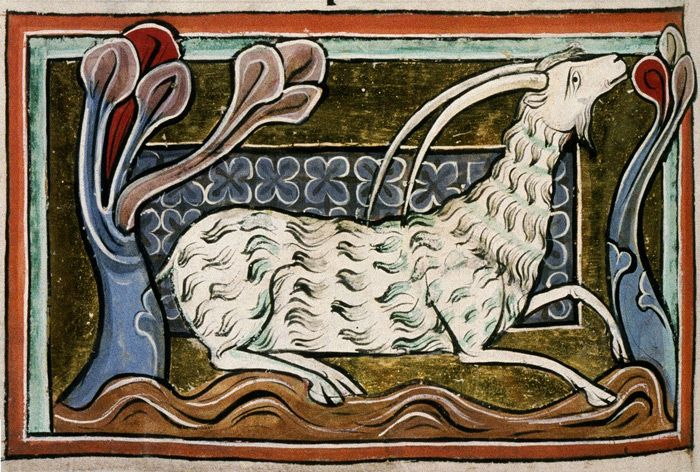Medieval bestiary: the he-goat, a lascivicious beast, known for its lusty nature. This nature makes the he- goat so hot that its blood can disolve diamond. Bodleian Library, MS. Bodley 764, Folio 36v.