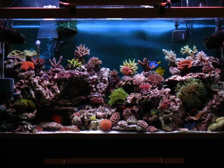 75 Gallon Reef Aquascaping Designs | here is my tank ...