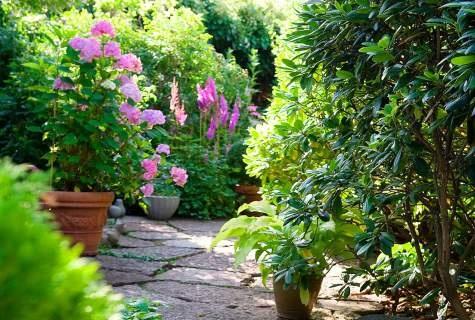 Perusta pieni puutarha