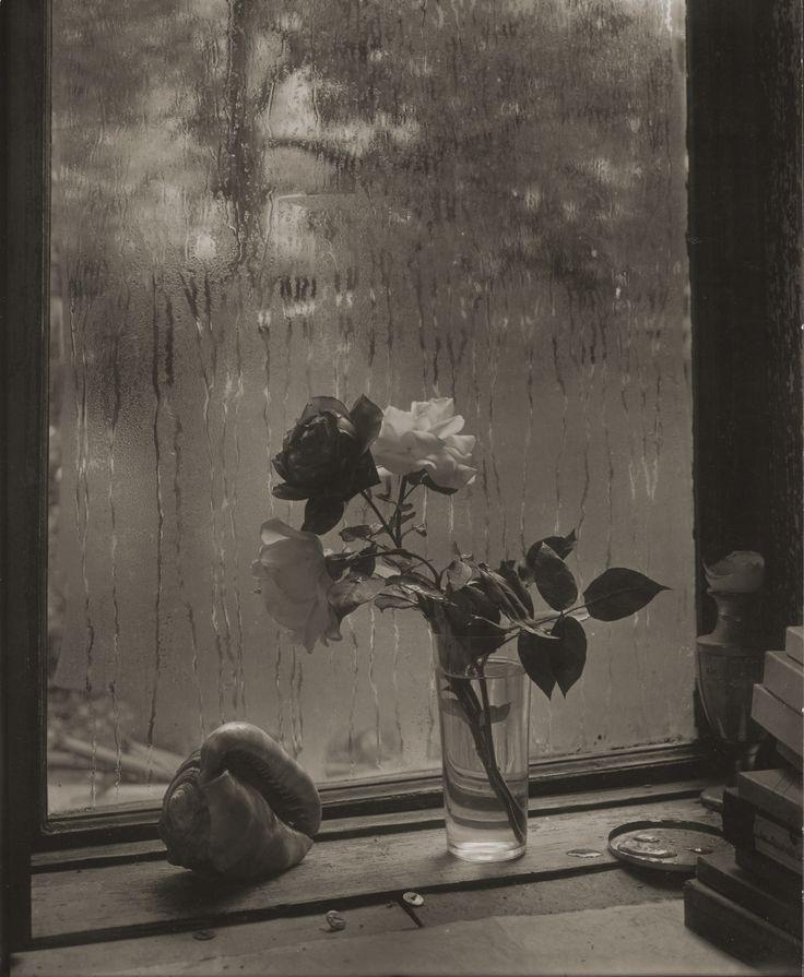 L'ultima rosa, 1956. - (Josef Sudek, Eredi di Josef Sudek/Museo delle belle arti…
