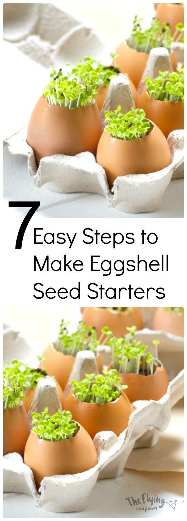 7 Easy Steps to Make Eggshell Seed Starters. DIY garden and gardening ideas and tips. Growing flowers, vegetables, and herbs for beginners. The Flying Couponer | Family. Travel. Saving Money.