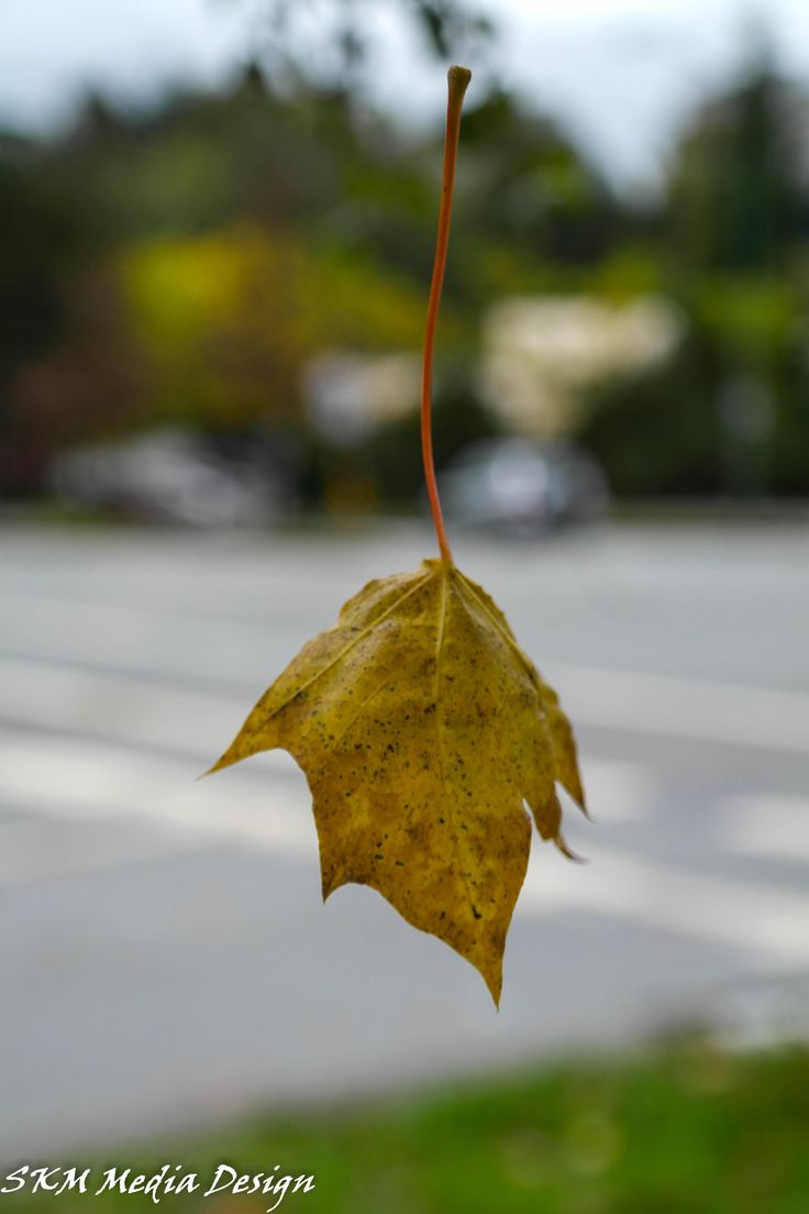 OHHHH! Floating Leaf Magic! #leave #leaf #magic #nature #fall #colours #illustration  #autumn #garden  #trickortreat #photoofday #skmmediadeisgn